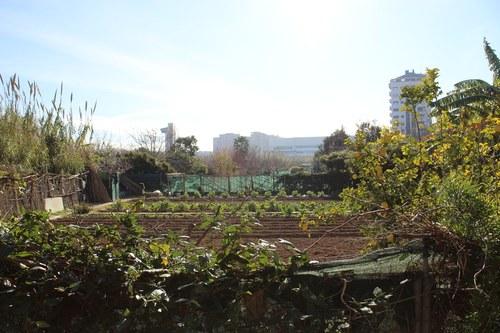 Huerto Urbano detras del Espai Verd